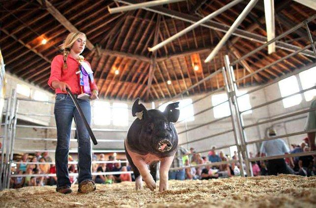 Pig fair