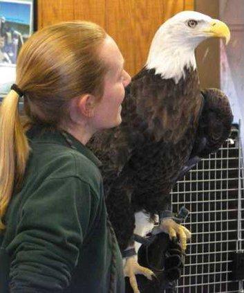 eagle-for-web