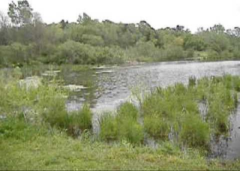 kickapoo wetland