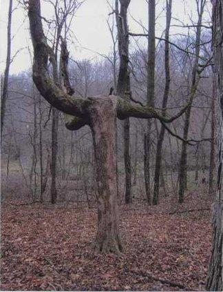 11-10 Indian tree