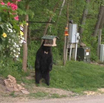 5-26 bear 1