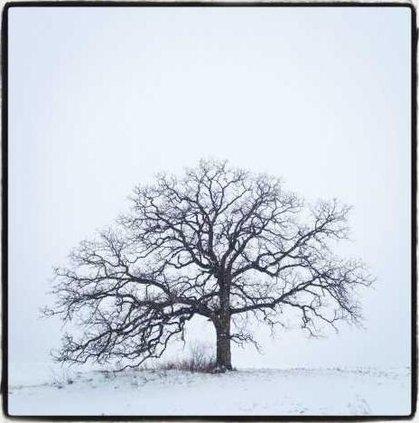 tree photo 1