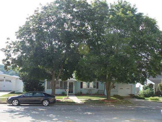 Sanders house  trees