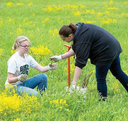 Tree planting in Memorial Park - UWP 2