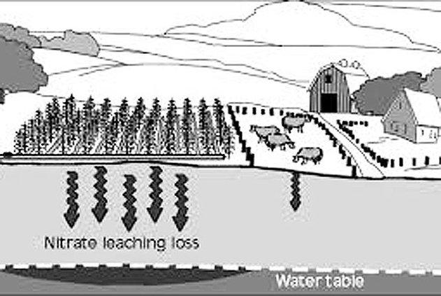 Nitrate Leaching