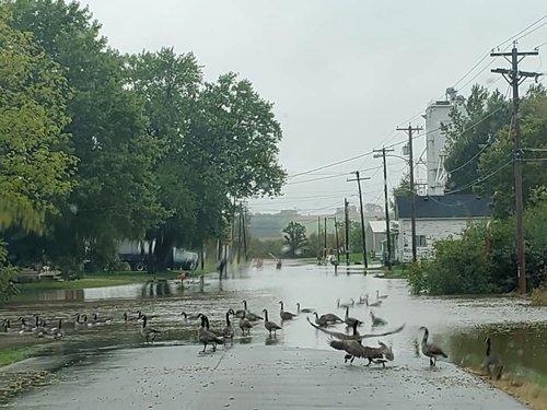 monticello flood