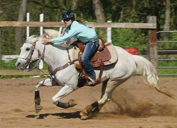 horse show stock