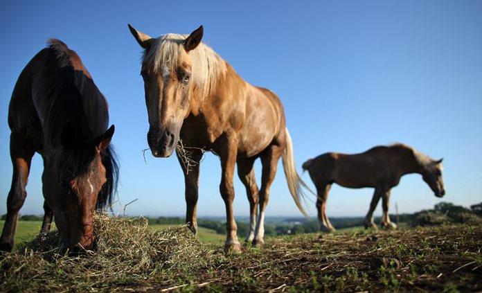 horses stock