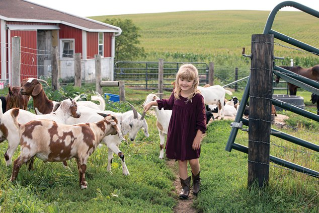 ellie makos cows