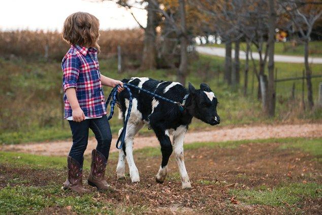 madelyn cow calf stroll