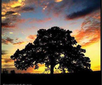 tree photo 17