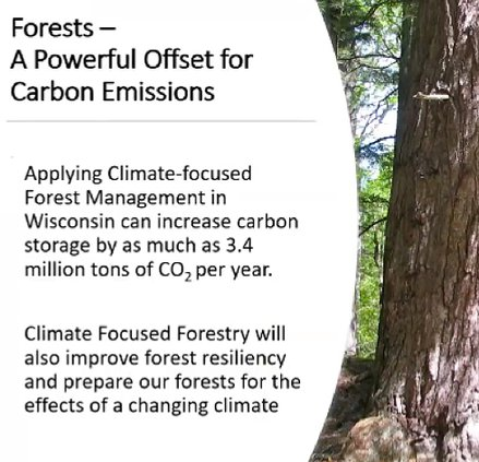 Forests as carbon sink