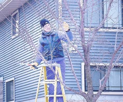Cindy Kohles pruning trees