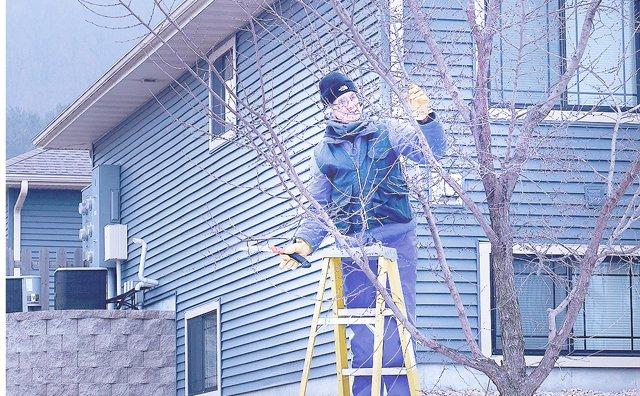 Cindy Kohles pruning trees