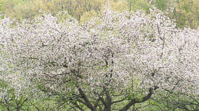News_Spring