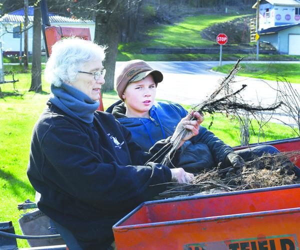 Kohles planting trees