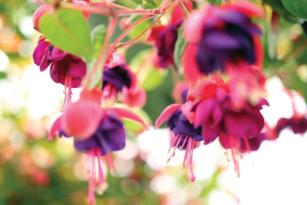 plant sale flowers