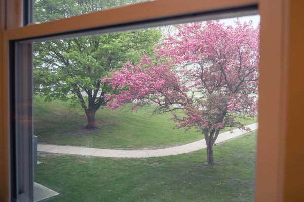 Pleasant view 2