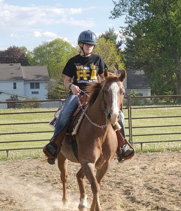 4-h horses horse riding